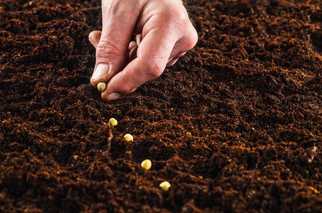 Checking Out Seeds - yes you read that correctly. You now can check out seeds at the Blount County Public Library.It's simple!Check out seeds now!Plant them!When you harvest your garden, bring seeds back for others to check out next growing season.You have to have a Blount County Public Library card, and then you can check out five seed packets per month.Maybe other libraries will follow suit.The old seeds are found in the old card catalog cabinets, younger folks don't know what those are. That is how we use to have to look up where books are before the internet days.Right now they have 700 seeds from local and out-of-state donors. They are still accepting seed donations now. SheilaPennycuff asks that the seeds all be heirloom, non-GMO, and non-hybrid seeds. They want to be ready and fully stocked for growing season in March.