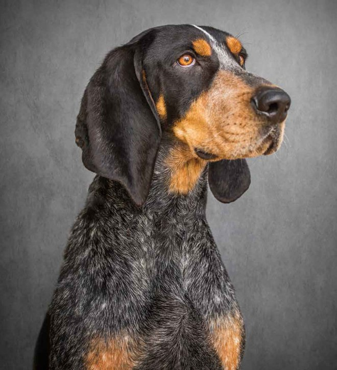 Smokey, Bluetick Coonhound now official Tennessee State Dog. This was signed into bill back in March of 2019.